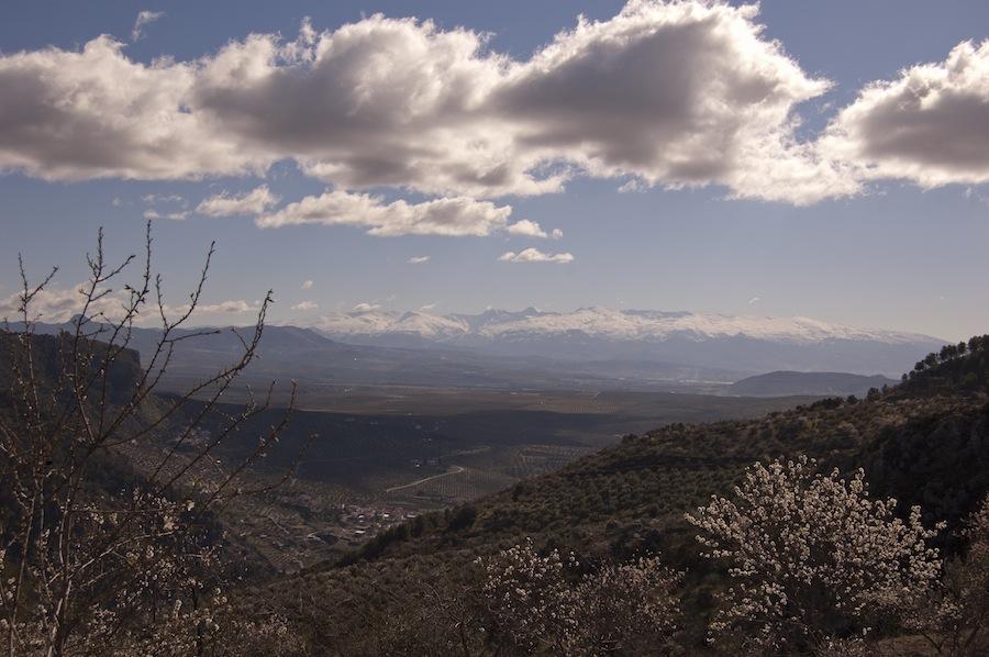 Almendros en flor y Sierra Nevada